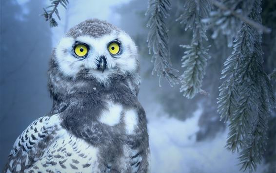 Papéis de Parede Coruja, olhos amarelos, pinho, neve