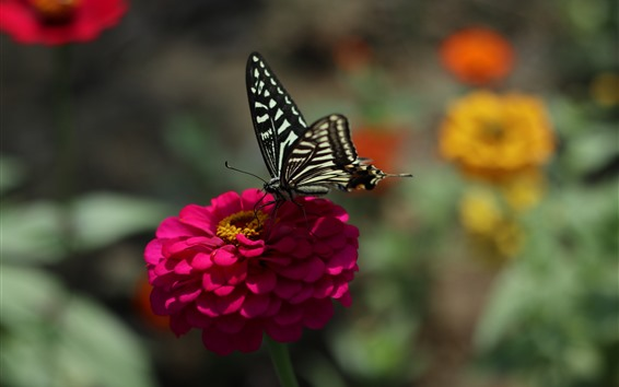 Papéis de Parede Flor rosa, borboleta preta, primavera