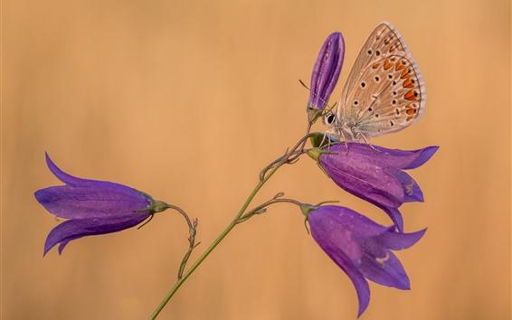 Papéis de Parede Flores de sinos roxos, borboleta