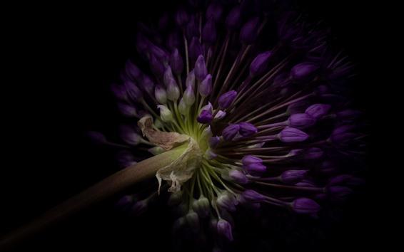 Wallpaper Purple flowers, darkness
