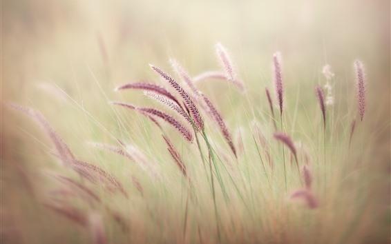 Обои Фиолетовая трава, туманная