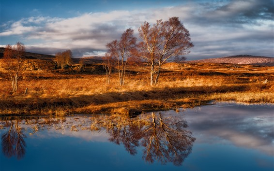Wallpaper Rannoch Moor, Scotland, trees, grass, water reflection
