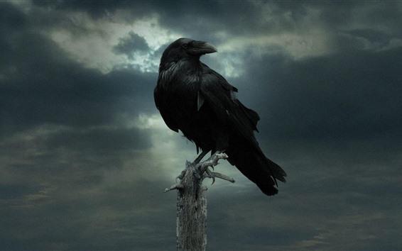 Wallpaper Raven, darkness