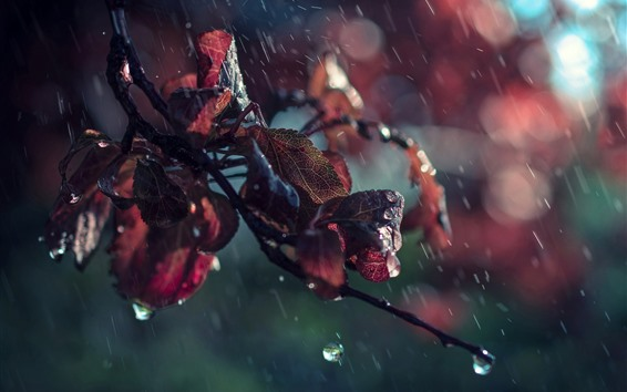 Wallpaper Red leaves in rain