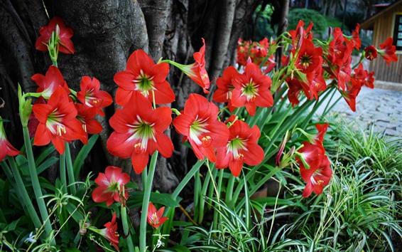배경 화면 붉은 난초, 꽃
