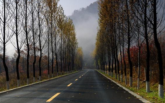 Wallpaper Road, trees, morning, fog