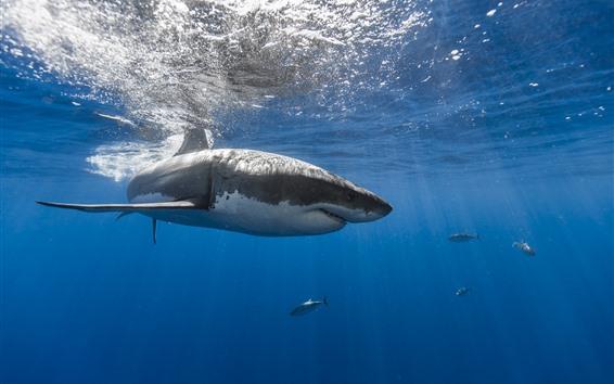 Fond d'écran Requin, mer, sous-marin, poisson