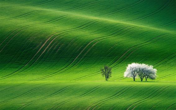 배경 화면 봄, 초록, 들판