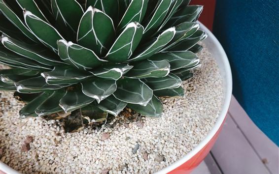 Papéis de Parede Plantas suculentas, vaso, pedras