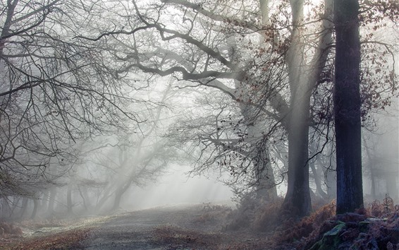 Hintergrundbilder Bäume, Nebel, Sonnenstrahlen, Morgen