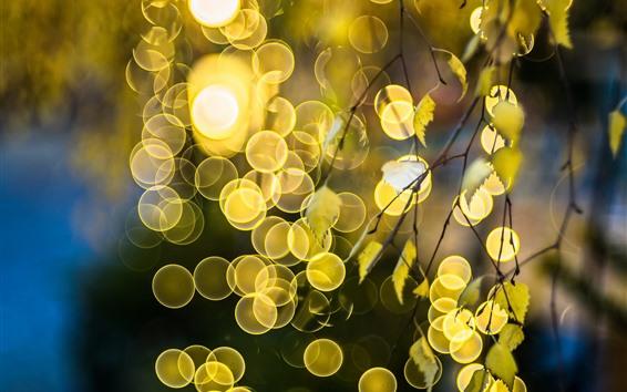 Papéis de Parede Galhos, folhas, brilho, círculos de luz