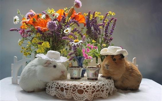 Papéis de Parede Duas cobaias bebem café, animal engraçado, flores