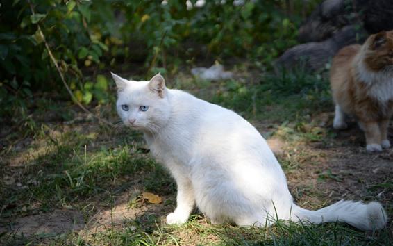 Papéis de Parede Gato branco sente-se no chão, sol