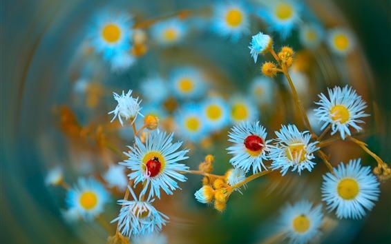 Papéis de Parede Flores brancas selvagens, joaninha, inseto