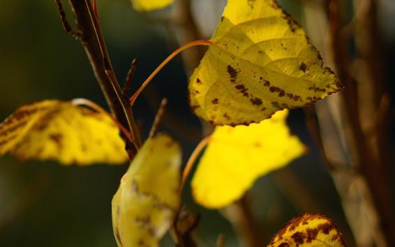 Обои Желтая листва, веточки, осень