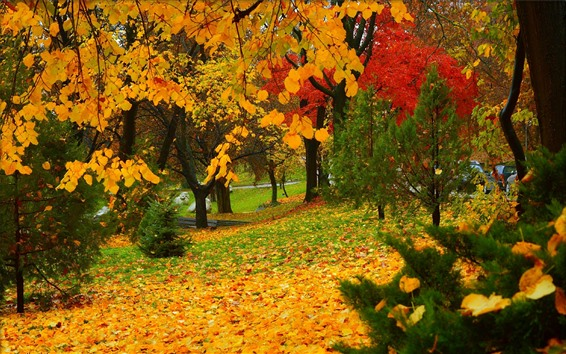 Wallpaper Autumn, park, trees, yellow and red leaves
