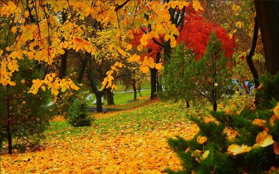 Обои Осень, парк, деревья, желтые и красные листья