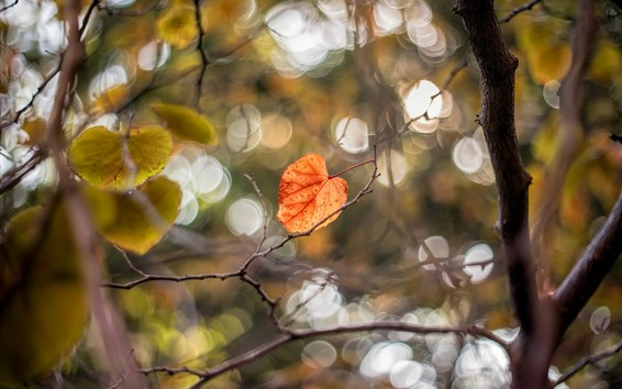 Wallpaper Autumn, yellow leaves, tree, twigs
