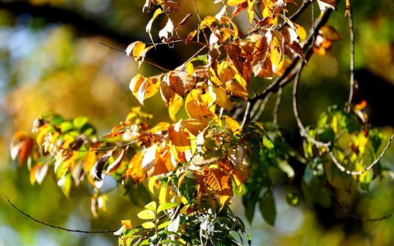 Wallpaper Autumn, yellow leaves, twigs, sunshine