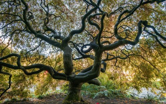 Wallpaper Big tree, twigs