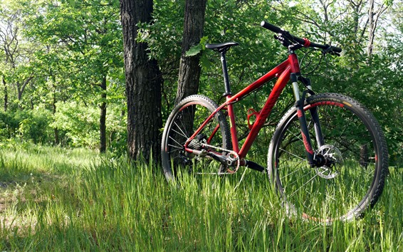 Wallpaper Bike, grass, forest