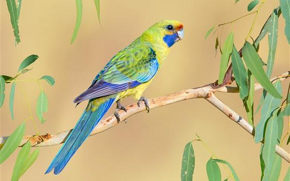 Papéis de Parede Pássaro, papagaio, folhas verdes