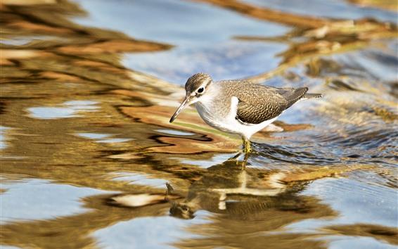 Wallpaper Bird, water, stream