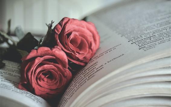 Papéis de Parede Livro, rosa vermelha
