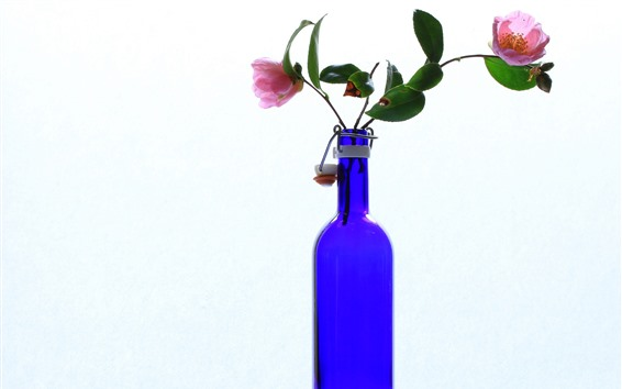 Papéis de Parede Camélia, garrafa azul, fundo branco