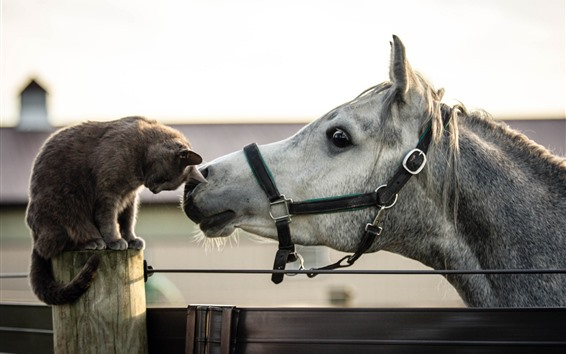 Wallpaper Cat and horse, friends