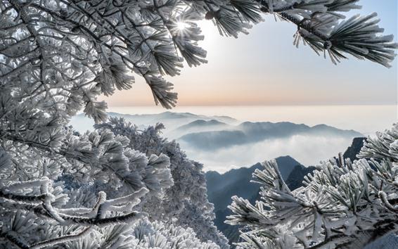 Papéis de Parede China, huangshan, montanhas, pinho, geada, neve, inverno