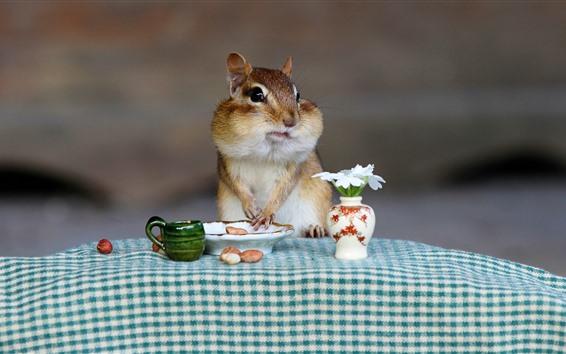 Обои Бурундук, арахис, цветы, завтрак, забавное животное