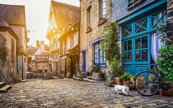 Wallpaper City, street, houses, cat, sunshine