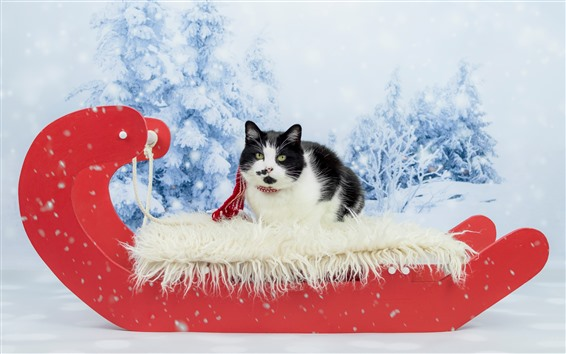 Wallpaper Cute cat, black and white, snow, New Year