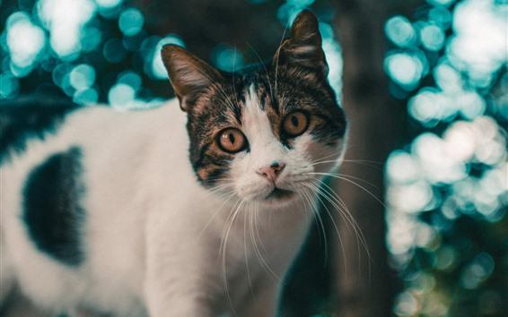 Papéis de Parede Vista frontal de gato bonito, árvore, desfocar o fundo