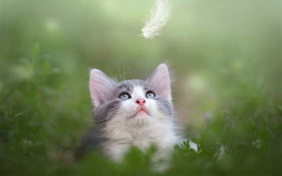 Wallpaper Cute kitten look at feather