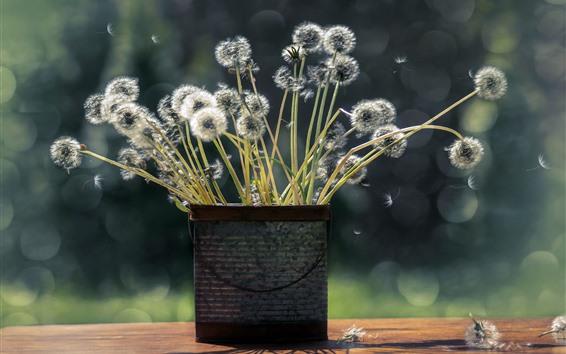 Обои Одуванчики, цветы, ваза, букет