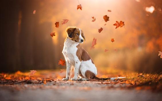 배경 화면 지상, 붉은 단풍 나무, 가을에 강아지 봐