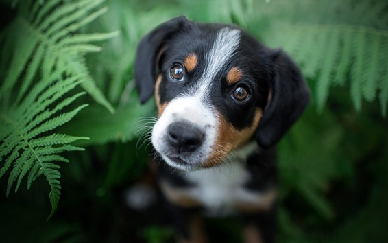 Wallpaper Dog look up, green fern leaves background