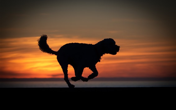 Wallpaper Dog run, silhouette, sunset