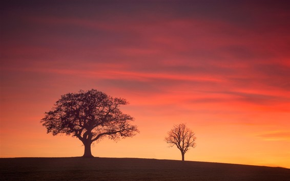 Wallpaper England, Derbyshire, trees, glow, red sky, sunset
