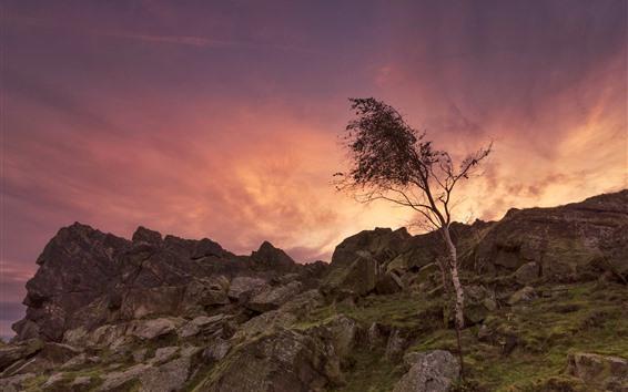 壁紙 イギリス、レスターシャー、樹木、岩、夕暮れ