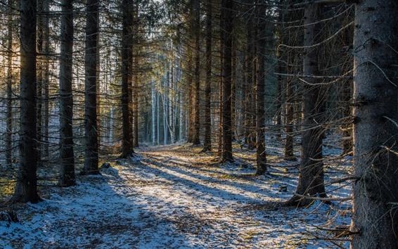 壁紙 フィンランド、サボンリンナ、森林、樹木、雪、冬