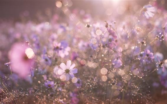 壁紙 花、曇り、夏、眩しさ