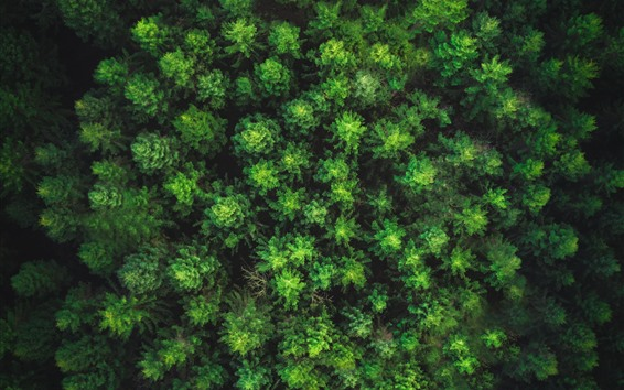 Wallpaper Forest top view, green
