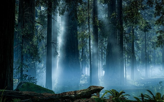 Wallpaper Forest, trees, rendering