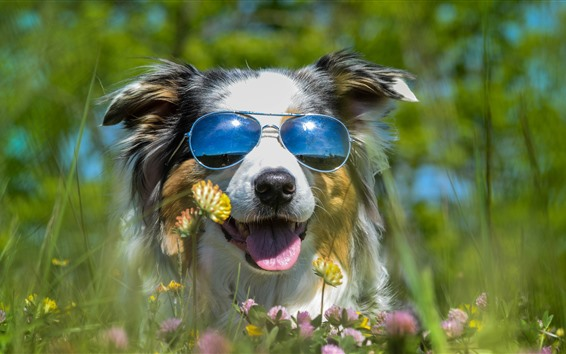 Wallpaper Furry dog, sunglass, wildflowers, funny animal