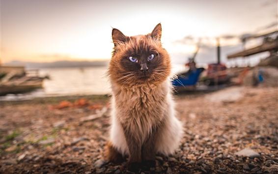 Wallpaper Furry kitten, shore