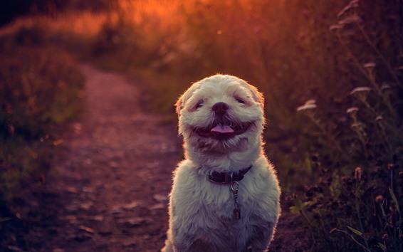 Wallpaper Furry white dog, backlight