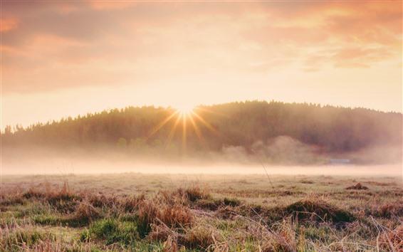 Wallpaper Grass, fog, morning